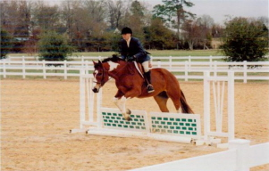 horseshow_photo_1